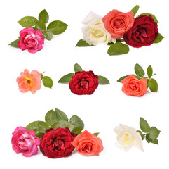 Beautiful rose with leaves isolated on white .