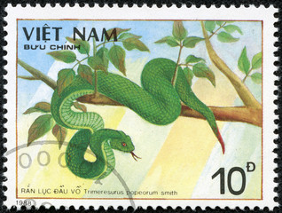 stamp printed in VIETNAM shows a Trimeresurus popeorum smith