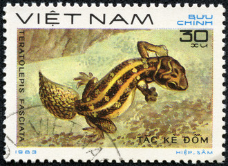 stamp printed in VIETNAM shows a Teratolepis fasciata