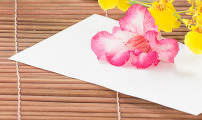 Paper and desert rose on bamboo wall