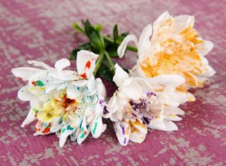 White flowers colorized different paints,