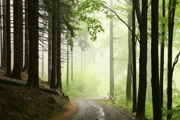 Keuken foto achterwand Bos in mist Misty spring morning in spring forest after rainfall