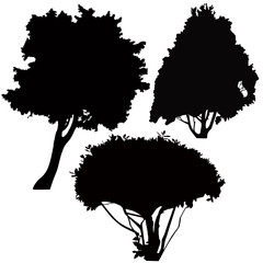 vector trees bushes isolated on white background