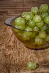 fresh vine