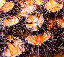 Sea urchins (ricci di mare)