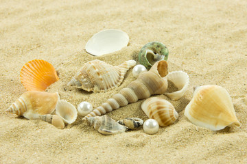 seashells,pearl, starfish on sand