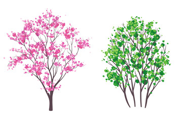 Spring and summer trees