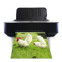 Printer and picture with White bantam