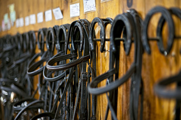 Horse bridles hanging in stable