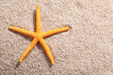 Starfish lying on golden beach sand