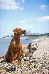 Two dogs staying on the beach shore