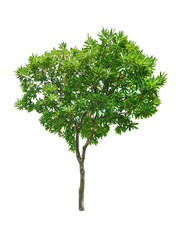 Beautifull green tree on a white background