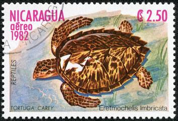 stamp shows a Hawksbill Sea Turtle Eretmochelys imbricata