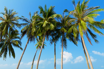 Palm trees at tropical coast