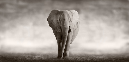 Photo sur Aluminium Elephant Elephant