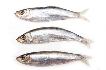 Sprats a small oily fish isolated on a white background