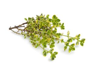 Twig of lemon thyme