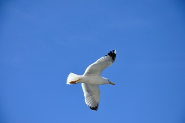 oiseau marin