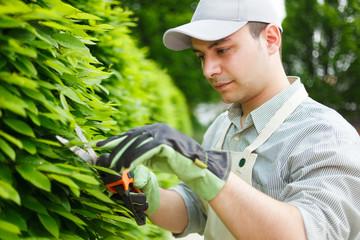 Gardener pruning an hedge
