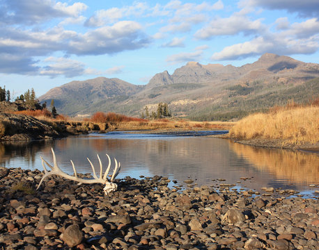 elk antlers - yellowstone national park backcountry