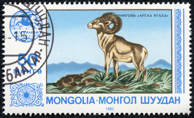 stamp printed by Mongolia, shows ovis