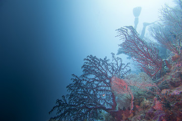 Colorful underwater landscape reef of Raja Ampat Papua