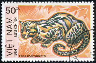 stamp printed in Vietnam shows Felis marmorata or marbled cat