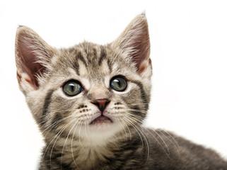 a cute little kitten portrait