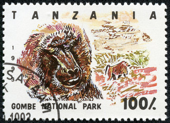 Stamp printed in Tanzania , shows baboon