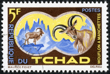 stamp printed by Chad, shows Aoudad or Barbary Sheep