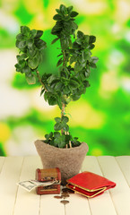 Money tree with money on wooden table on natural background