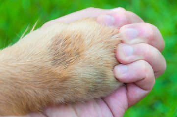 Love without frontier. Human and dog hold hands.