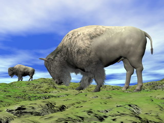 Bisons and grassland - 3D render