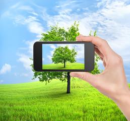 Phone and tree