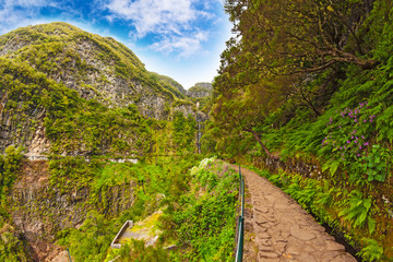 "Landscape on the Island Madeira, path near the ""Levada"""