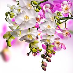 Foto auf Acrylglas Orchideen Wellness: Orchideen