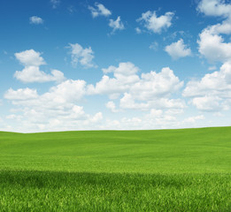 Rural landscape, empty green field with copy space