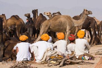 Keuken foto achterwand India Pushkar Camel Mela. Rajasthan, India.