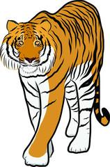 Hand drawn tiger vector