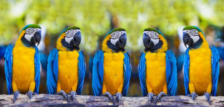 macaws sitting on log.