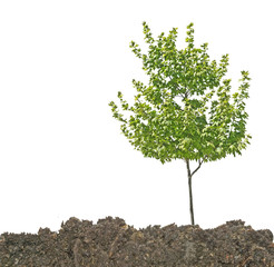 Tree in soil