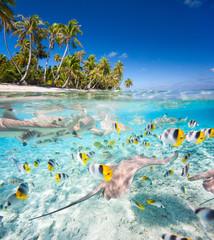 Obraz Tropical island under and above water - fototapety do salonu