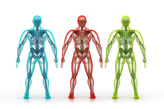X-ray illustration of human body and skeleton.