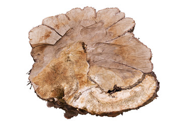 Big sliced tree trunk giving view of inner texture, isolated on