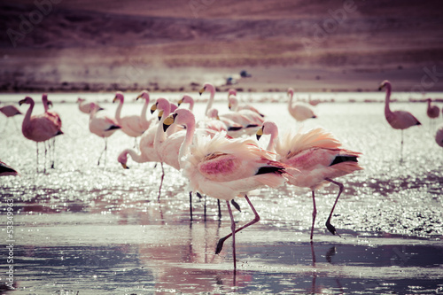 Wall mural Flamingos on lake in Andes, the southern part of Bolivia