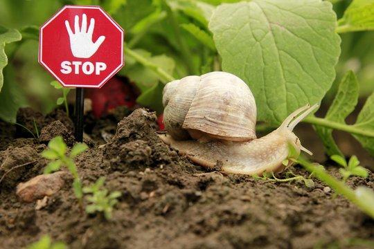 Vorsicht Gift Schnecken Stop
