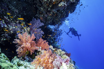 Red Sea Reef with a underwater Photographer