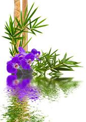 composition tropicale, orchidée, bambou