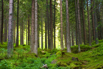Beautiful magic woods