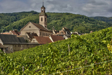 vineyard of Riquewihr in Alsace